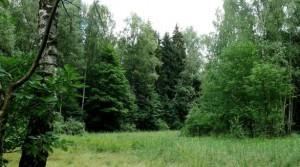 В Верхнедвинске объявлена «Неделя леса»