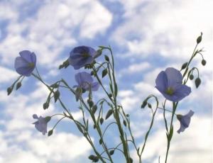 Каким будет урожай-2013?