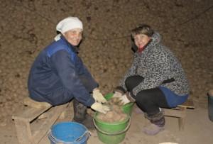 Леонишенский картофель пользуется спросом