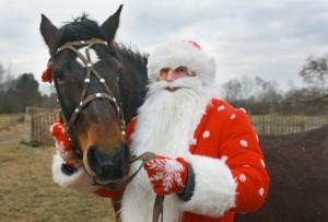 В Новый год — на коне
