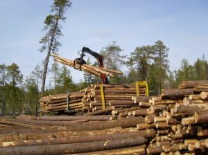 В райисполкоме проанализирована работа лесозаготовительных организаций