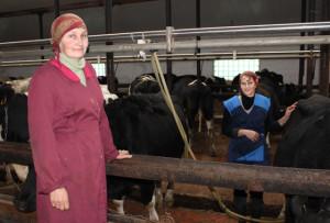 Показатели в животноводстве зависят от качества работы