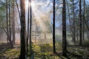Разводить костры в лесу и выжигать сухую траву запрещено!