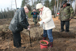Посадку деревьев ведут председатель районного Совета депутатов И. Ф. Козел и ветеран войны В. В. Дащёнок.