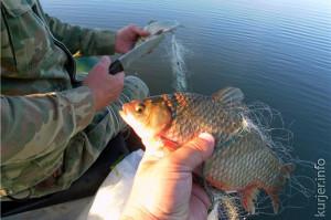 Незаконная добыча рыбы обходится очень дорого