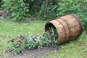 Даже в старой бочке хозяйка оборудовала вот такой необычный цветник.