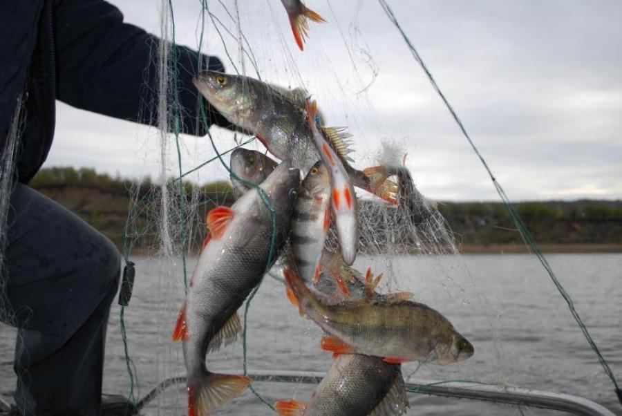 как называется ловля рыбы сетями