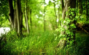 лес-1
