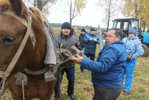 Хозяин поля - директор СП «Верхнедвинский»  А. Т. Тумашевич  показал, что умеет управляться с конём.