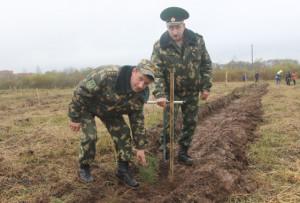 П.Голубев и Ж.Кувшинов высадили в парке саженцы сосны.