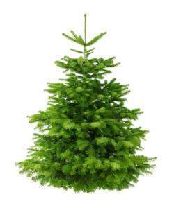 Скоро начнётся продажа новогодних ёлок