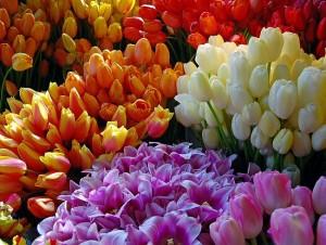 О реализации цветов