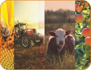 Создаются условия для развития личных подсобных хозяйств