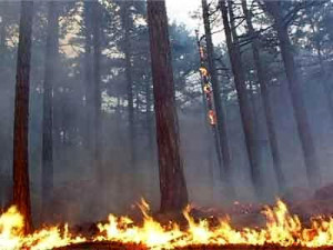 не допустить пожаров в экосистемах поможет уборка