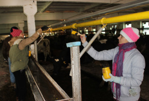 В Верхнедвинском районе горожане помогают наводить порядок в агрогородках