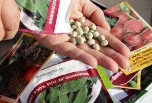Как выбрать семена для сева