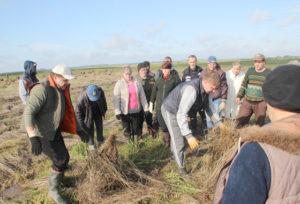 В выходные на льняные поля района вышло 800 горожан