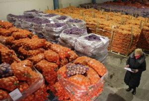 На зиму создан надёжный запас овощей и фруктов