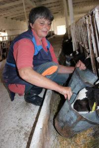 Животновод из Сарьи выхаживает более тысячи новорожденных телят