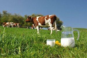 Как формируется закупочная цена на молоко?