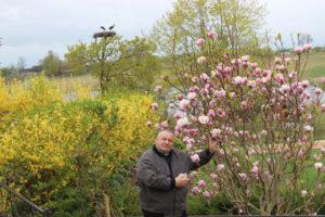 У Росіцы цвітуць магнолія і сакура
